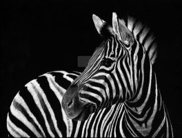 Zebra No3 by SAU21866