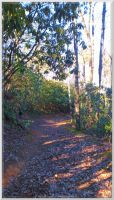 Finley Cane Trail Scenery 36 by slowdog294