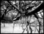 Dripping Pneumonia by partyboy9289
