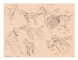 Horse - Comparative Anatomy by CatCouch