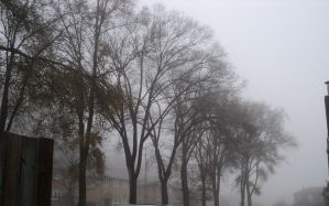 the fog in my life. by analovecatdog
