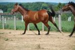 warmblood20 by Spotstock