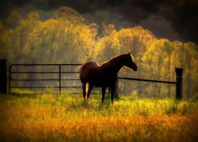 Hope's In The Field by toddcarter