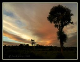 Cabbage Tree Sunset by JonGoldie