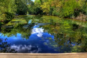 Summer Reflected by Elva-Luthien