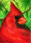 Northern Cardinal by Skarlet-Raven