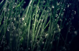 Raindrops [2] by rachel93