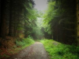 Misty Forest by Weissglut