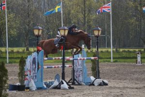 Chestnut Horse - Show Jumping stock - 11.6 by MagicLecktra