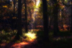 Ethereal Forest by Capturing-the-Light