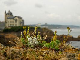 Simply Biarritz by AgiVega