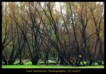 After The Wildfire 2 by KSPhotographic