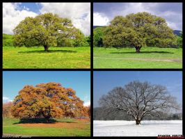 Four Seasons by PaSt1978