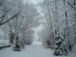 First Winter Day 11 by ScWeeGee-Boy-Stock