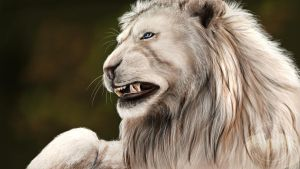 ...::: White Lion SP by AmorpheusArt