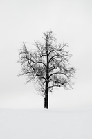 Winter by whensummerends