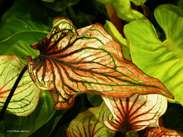 Intricate leaves 2 by Mogrianne
