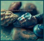 Blue Shells and Drops by mariquasunbird1