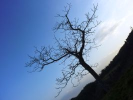Naked Tree Silhouette by AdMalamCrucem