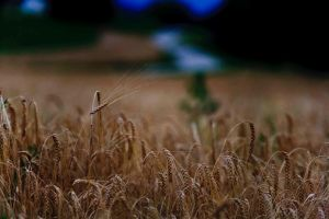 Field in the evening by luka567