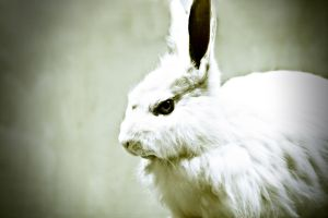 White Rabbit by khakisoul