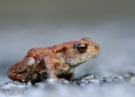 Bufo by efeline