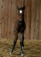 Filly Foal .Stock:. by Photopolis