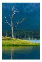 Lake Moogerah by Cameron-Jung