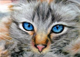 Chanel, Lit'l Miss Blue-eyes by KathleenCasey