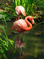 Philadelphia Zoo 9 by Dracoart-Stock
