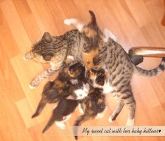 My cat with her baby kittens by demeters