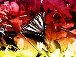 Butterfly and the Flame by Morna