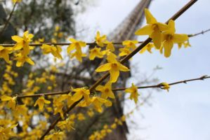 Tour Eiffel in Spring by IHanakoI