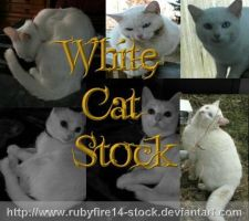 White Cat Stock Pack by Rubyfire14-Stock