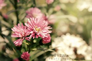 Oh so lovely by Titiaphotography