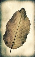 Une feuille by 2jL