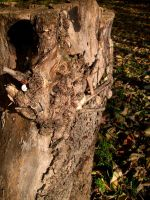 An old stump with insects by Darito111