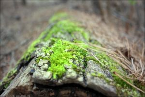 Moss by lonepalms