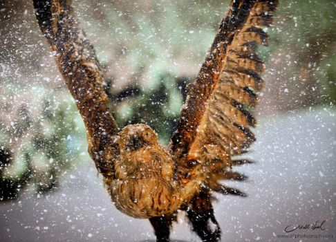 Eagle and snow by AliPhotography
