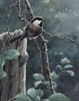 Morning Chickadee by MistiqueStudio