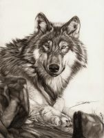 Lying Wolf by AmBr0