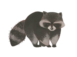 Cookie the Raccoon by asyuumi