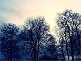 Winter trees. by 333Miami333