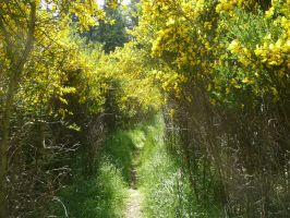 Broom Path by Track-Maidens