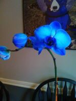 Blue Orchid by Jenny42