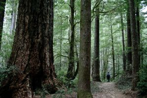 Oregon Redwoods Trail I. by swampliquor