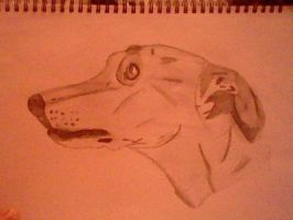 Greyhound drawing by an 11 year old by slashclaws1