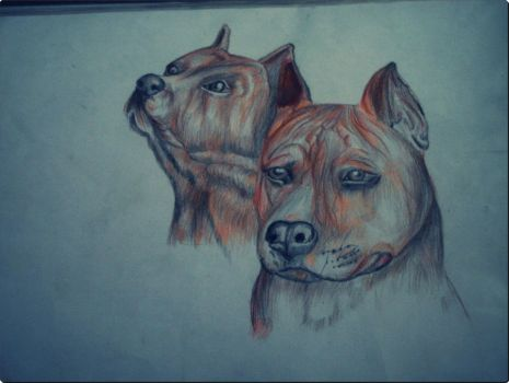 Dog Drawing by Vester01