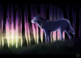 Forest Light by TiriKou