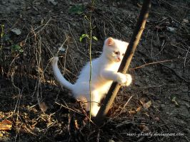 big white cat catches up prey by Mari-Ghostly